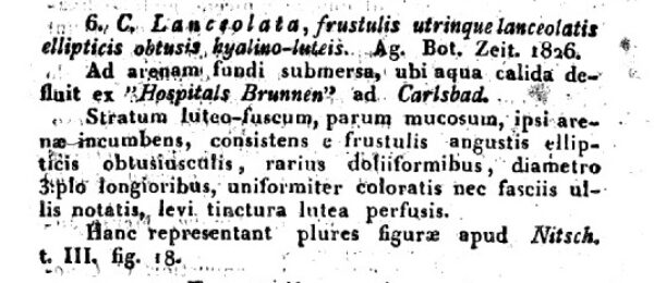 Frustulia lanceolata orig desc