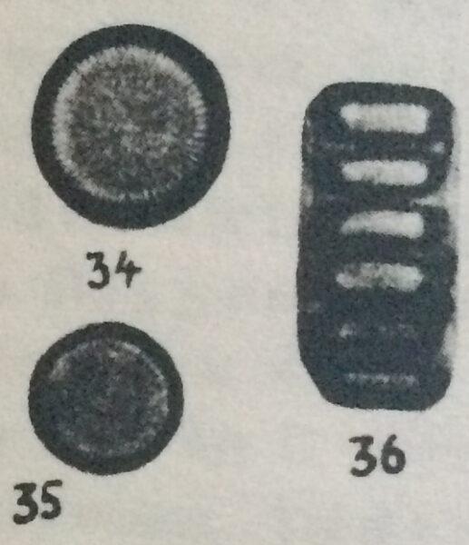 Cyclotella delicatula orig illus 2