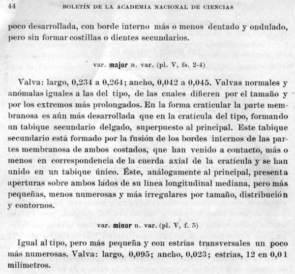 Navicula pampeana orig illus