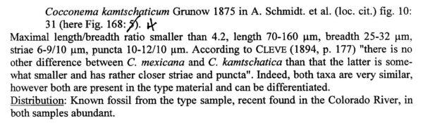 Cymbella mexicana var. kamtschatica orig desc