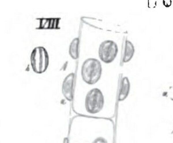 Cymbella pediculus orig illus