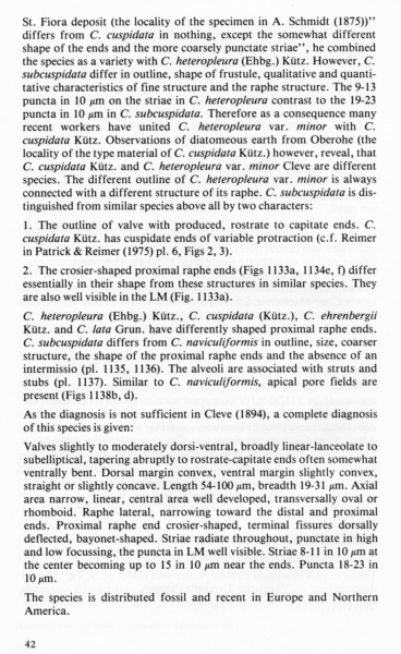 Cymbella subcuspidata orig illus