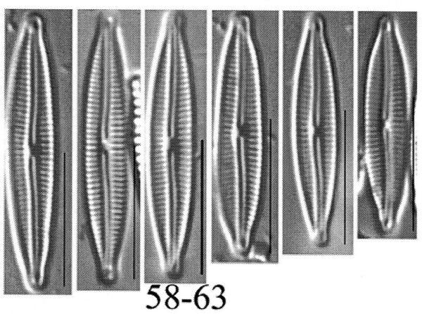 Encyo Anacondae Origimag Cropped