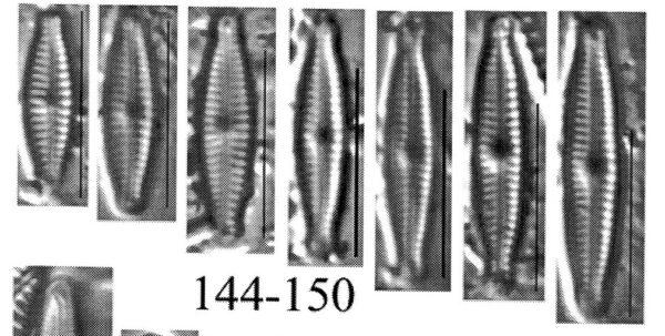 Encyonopsis bobmarshall orig illus
