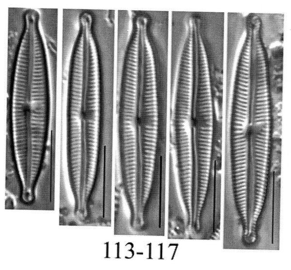 Encyonopsis dakotae orig illus
