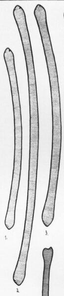 Eunotia tautoniensis orig illus 2
