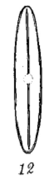 Frustulia vulgaris var. asiatica orig illus