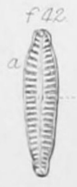 G Sarcophagus Origpic  Jw