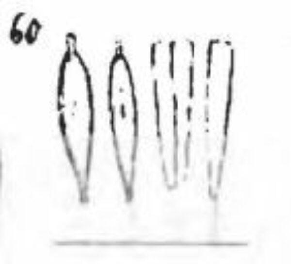 Gomphonema Lagenula Orig Image