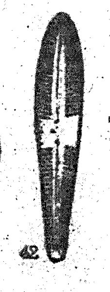 Gomphonema Semiapertum Origimag