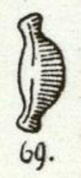 Mayer 1919 Image