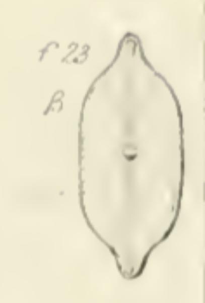 Nalacustris