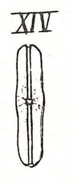 Nalaevissima Original Image2