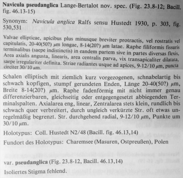 N Pseudanglica Orig Desc 1985