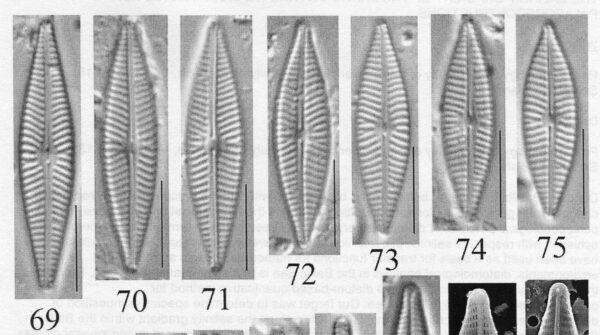 Naviculasupleeorum Origimag007