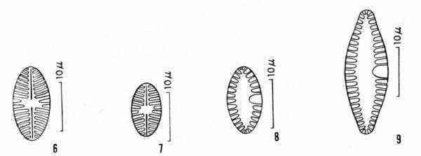 Plabbrev  Or Ill001