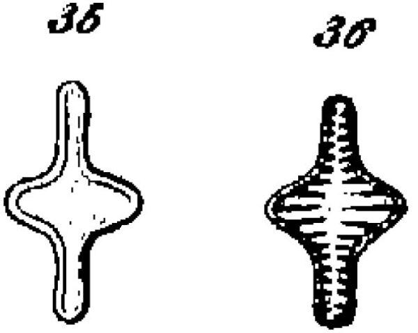 S Leptostauron Iconotype