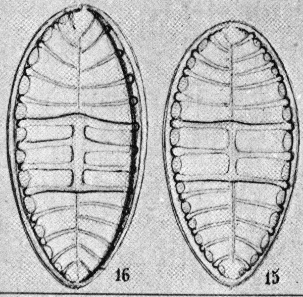 Schmidt  Atlas 1877  T56  Sur Cruc