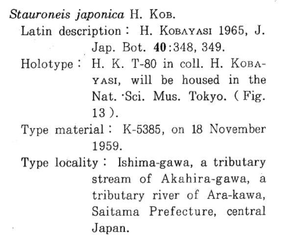 Sellaphora Japonica Orig Desc 1986 Text