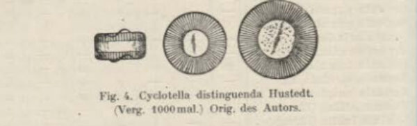 Cyclotella distinguenda orig illus