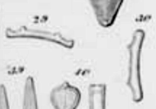 Eunotia bactriana orig illus