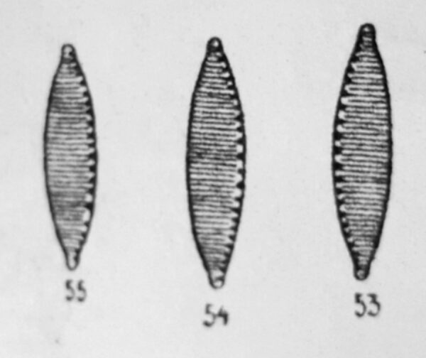 Nitz Desertorum Orig Desc Plate