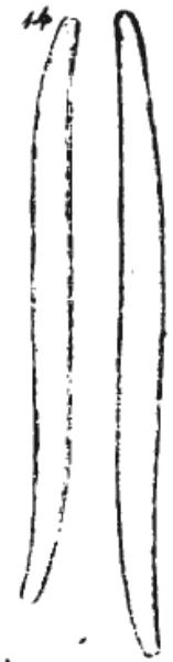 Synedrasigmapic