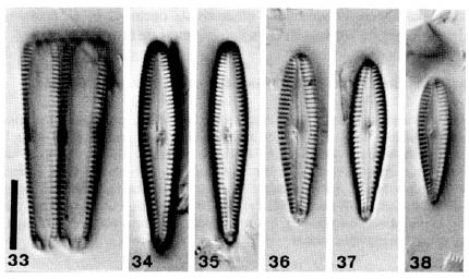 Gomp Incognitum Orig Desc Plate1