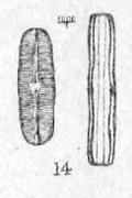 Nav Subhamulata Orig Desc Plate